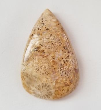 33.92 ct Natural Fossil Coral Pear Cut Loose Gemstone