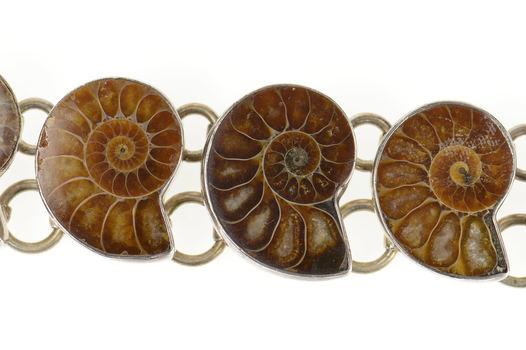 "Sterling Silver Nautilus Ammolite Shell Fossil Statement Bracelet 6.5-8"""